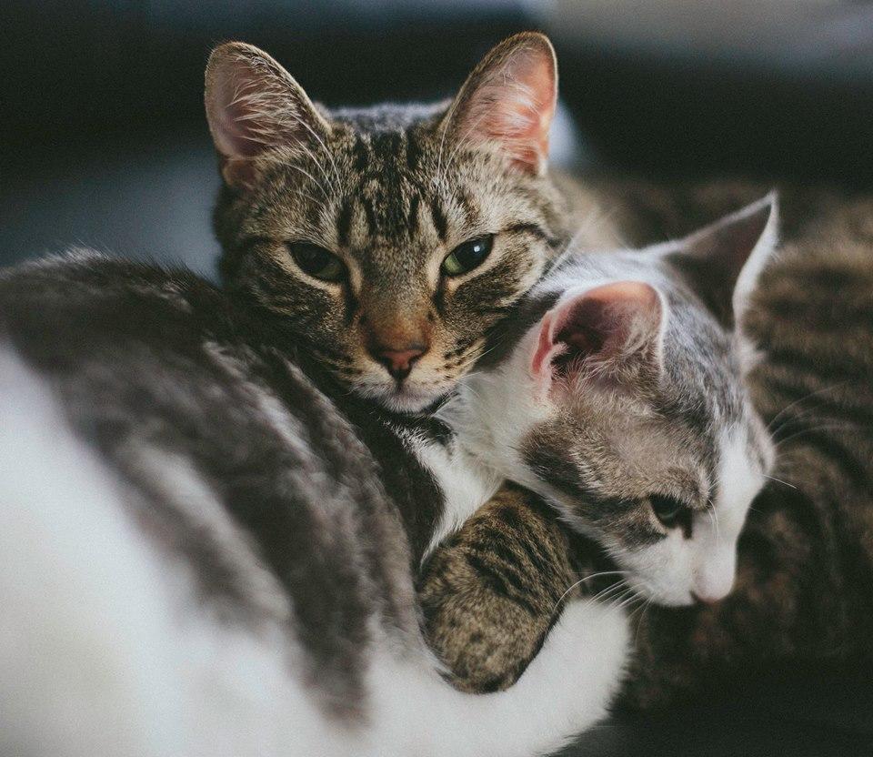 Kittens are smitten